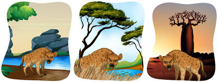 Hyenas in the field Royalty Free Stock Photos