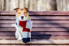 Hygge-Konzept mit dem glücklichen Hund, der gemütlichen warmen Schal trägt lizenzfreies stockbild