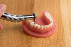 Hygiéniste dentaire démontrant les dents de polissage Photographie stock libre de droits