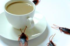 Hygiëne, gezondheidszorg en medisch concept Kakkerlak die koffie eten De kakkerlakken zijn dragers van de ziekte royalty-vrije stock foto
