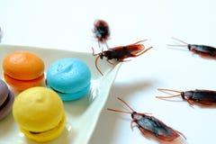 Hygiëne, gezondheidszorg en medisch concept Kakkerlak die makaron eten De kakkerlakken zijn dragers van de ziekte royalty-vrije stock fotografie