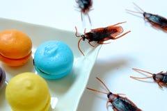 Hygiëne, gezondheidszorg en medisch concept Kakkerlak die makaron eten De kakkerlakken zijn dragers van de ziekte stock fotografie