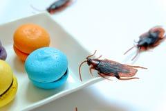 Hygiëne, gezondheidszorg en medisch concept Kakkerlak die makaron eten De kakkerlakken zijn dragers van de ziekte royalty-vrije stock afbeelding