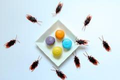 Hygiëne, gezondheidszorg en medisch concept Kakkerlak die makaron eten De kakkerlakken zijn dragers van de ziekte royalty-vrije stock afbeeldingen