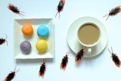 Hygiëne, gezondheidszorg en medisch concept Kakkerlak die makaron en koffie eten De kakkerlakken zijn dragers van de ziekte stock foto