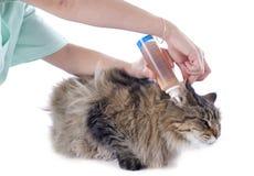 Hygiene von Ohren Stockbild