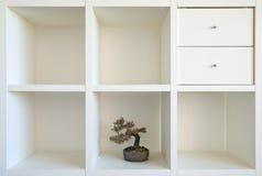 hylla för bonsai ii fotografering för bildbyråer