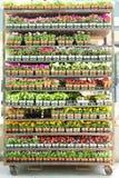 Hyllor mycket av inlagda plantor i en barnkammare Arkivfoto