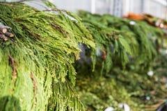 Hyllor som fylls med julgrönska Arkivfoton