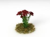 Hylotelephium spectabile Zdjęcia Royalty Free