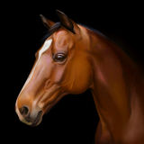 Hyper realistic digital painting of a horses head Royalty Free Stock Photos