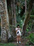 Botanist asian girl learning adventure outdoor activity with lifestyle in rainforest. HyperFocal: Biologist botanist asian girl learning adventure outdoor royalty free stock photo