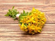 Hypericum flowers, Hypericum perforatum or St Johns wort Royalty Free Stock Photo