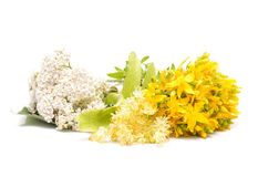 Hypericum flowers, linden flowers and yarrow flowers Royalty Free Stock Image