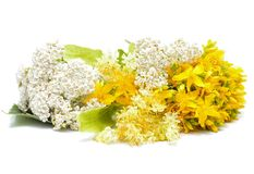 Hypericum flowers, linden flowers and yarrow flowers Royalty Free Stock Photo