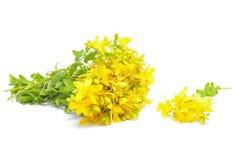 Hypericum flowers Royalty Free Stock Photo