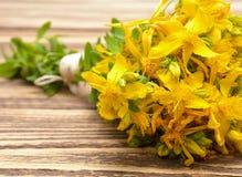 Hypericum flowers Stock Photography
