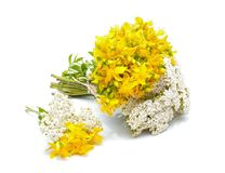 Hypericum flowers and yarrow flowers Royalty Free Stock Photos
