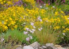 Hypericum olympicum and Dianthus plumarius Stock Photo