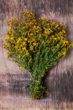 Hypericum perforatum Royalty Free Stock Image