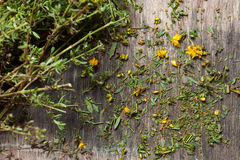 Hypericum perforatum Stock Images