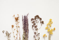 Hypericum, sage, thyme, oregano, immortelle stock photo