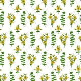 Hypericum, St. John`s wort or Hartheu branch vector sketch hand drawn healing herb isolated on white bckground, Tutsan. Herbs, Seamless pattern, design for card Stock Photo