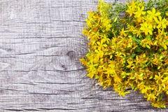 Hypericum - St Johns wort plants royalty free stock photo