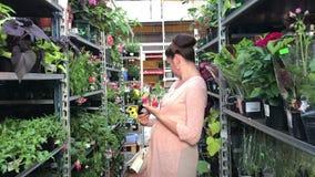 Hypermarché de jardin de MINSK, MINSK, BIÉLORUSSIE 2 JUIN 2019 Sur les étagères soyez a arrangé les fleurs fraîches dans des pots banque de vidéos
