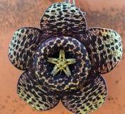 Hypnotic flora Royalty-vrije Stock Fotografie