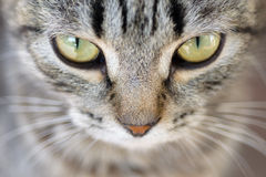 Hypnotische Cat Eyes Stockfotos