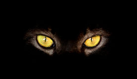 Hypnotische Cat Eyes auf schwarzem Hintergrund Lizenzfreie Stockbilder