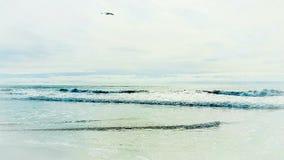 Hypnotisera fängsla som lockar skönhet av Stilla havet Royaltyfri Fotografi