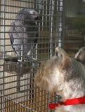 Hypnotizing Vogel Lizenzfreie Stockbilder