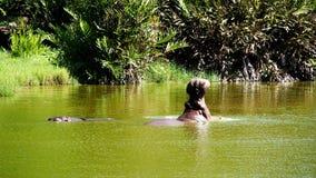Hypopos tropicaux au Kenya Images libres de droits