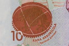 Hypsiboas granosus frog. On the ten thousand Colombian pesos bill Stock Photo