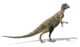 Hypsilophodon Dinosaur Royalty Free Stock Photos