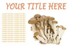 Hypsizygus marmoreus Royalty Free Stock Image