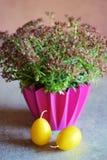 Hyra rum växtcrassulamulticavaen och två gula påskstearinljus Royaltyfri Foto