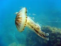 Kwallen in Middellandse Zee Royalty-vrije Stock Foto's