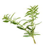 Hyssop Herb Leaves. Hyssop herb leaf sprigs isolated over white background. Hyssopus stock images