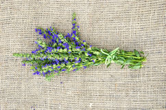 Hyssop on linen. Bunch of hyssop on linen material covering table surface royalty free stock photography