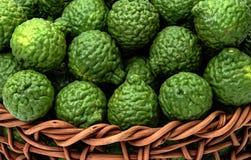 Hystrix dell'agrume, frutta del bergamotto per medicina di erbe fotografie stock libere da diritti