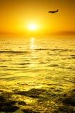 Hyvla flugan över bevattnar under soluppgång Arkivfoton