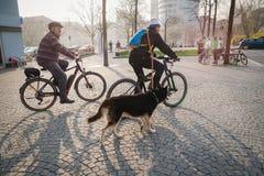 Iéna, Allemagne 23 mars 2019 Aînés montant des bicyclettes avec un grand chien photographie stock