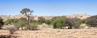 Iść namibia w Namibia duży diuna Obraz Royalty Free