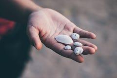 手和壳在海滩 免版税图库摄影