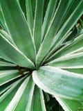 I andra hand grön växt Fotografering för Bildbyråer