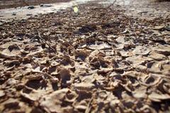I avsaknad av vatten Royaltyfri Fotografi
