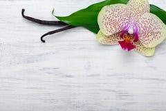 I baccelli e l'orchidea della vaniglia fioriscono su fondo di legno Copi lo spazio Fotografie Stock